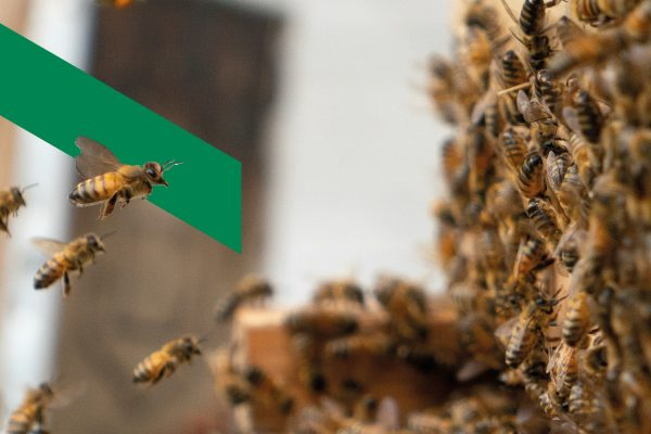 Des ruches sur notre toit!
