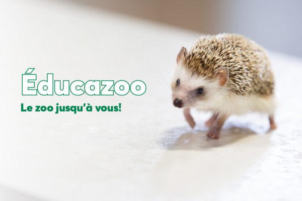 Concours «Le zoo jusqu'à chez vous!»